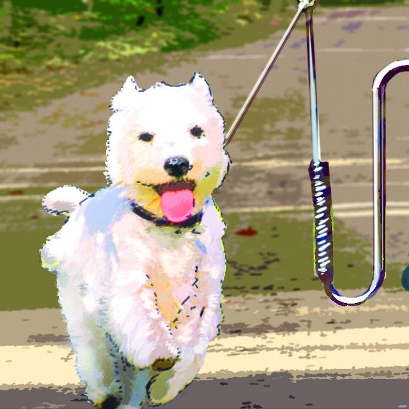 Hundehalter 'Springer' - Hundehalter 'Springer'