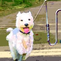 Hundehalter 'Springer' - FAHRRAD - KONTOR | Fahrraddiscount | Gute Räder, gute Preise